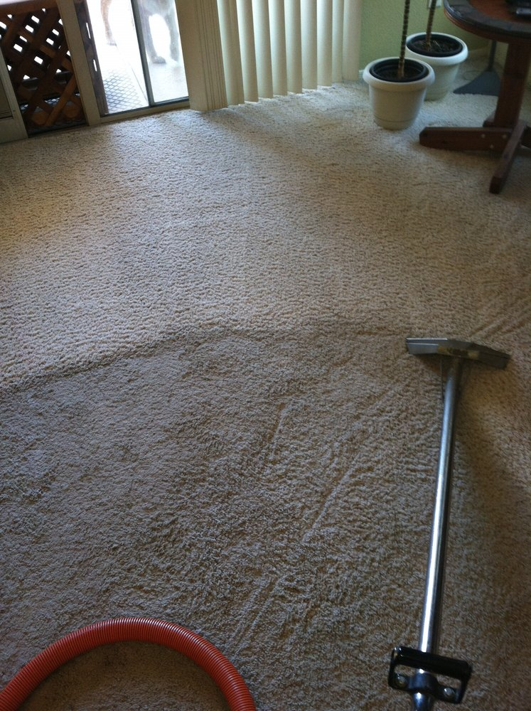 Dog carpet stain removal